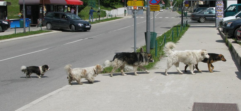 žeby_tu_skapal_pes?